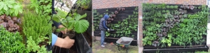 Glyndon Community Centre Edible Wall