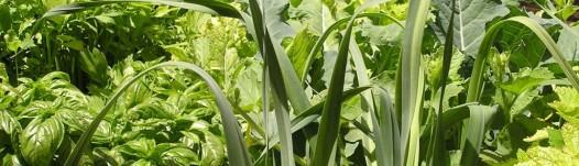 cropped-vegetal_aquaponics.jpg