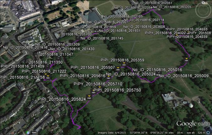 bats in greenwich park