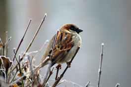 sparrow-bird-animal-nature-86591.jpeg