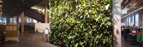 University of Greenwich Living Wall